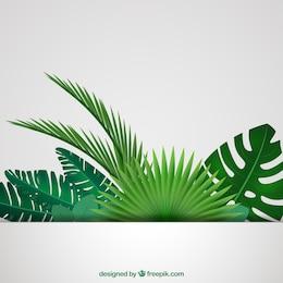 Folhas tropicais fundo