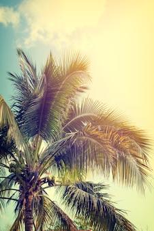 Foto da natureza do vintage da palmeira de coco na costa tropical do beira-mar