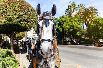 Frente cavalo