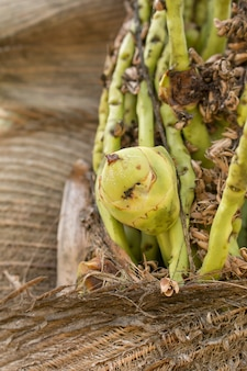 Frescor de flores de coco brunch em planta.