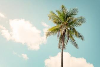 Fundo da natureza vintage - Palmeira no céu azul no verão. tom de cor vintage