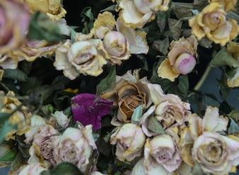 Fundo de flores secas