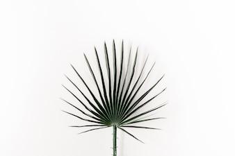 Fundo de folha de palmeira branca
