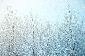 Fundo de inverno da natureza.