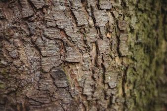 Fundo de madeira velho da casca de árvore