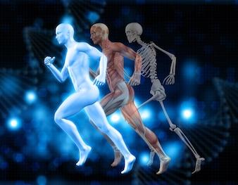 Fundo médico 3D com figuras masculinas em pose de funcionamento com o mapa do músculo e esqueleto