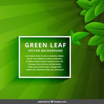 Fundo verde da folha