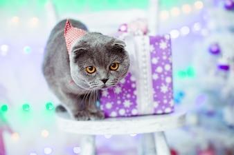 Gato cinza bonito e o presente de Natal