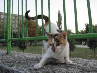 gato de rua brincalhão