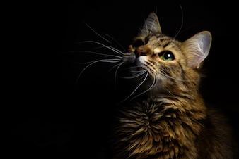 Gato em um fundo escuro