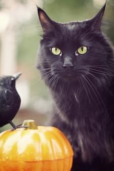 Gato preto com abóbora e pássaro