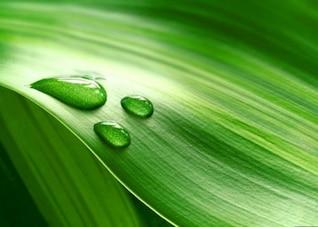 gotas de água na folha verde fresco