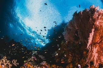 Grande seascape com luz solar