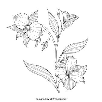 Entregue as flores desenhadas