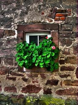 Hera velha janela de pedra coletor de parede flores olho