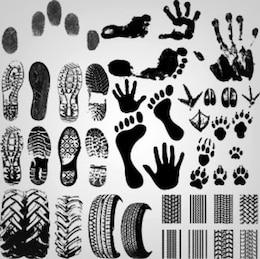 ilustração: coleção de pegada shoeprint