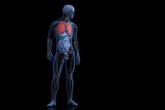 Ilustração da anatomia humana com pulmões destacados