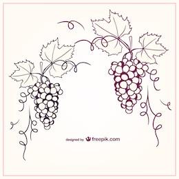 Ilustração uvas vetor