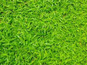 Imagem em close-up de grama verde primavera primavera.
