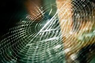 inseto teia de aranha