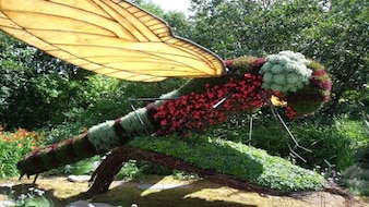 jardim de plantas libélula flores