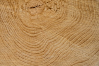 Jovem madeira