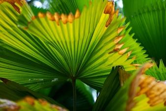 Kuala Lumpur parque florestal detalhes de textura