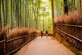 KYOTO, JAPÃO - novembro 12: O trajeto à floresta de bambu em Kyoto, Japão em novembro de 2015. Kyoto é um do destino tourist o mais famoso em Japão.