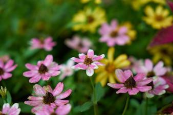 Laranja verão natureza flor colorida
