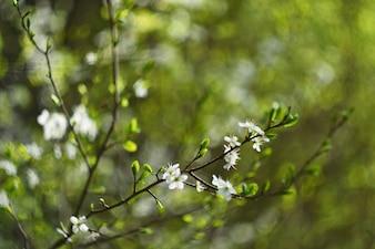 Lentes de fotos antigas com fundo e anéis bonitos - bokeh. Árvore de flores. Fundo da natureza. Dia ensolarado. Flores da primavera. Beautiful Orchard. Fundo borrado abstrato. Primavera