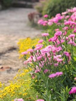 Lindas flores rosa e amarelas