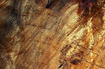 Linhas de árvore