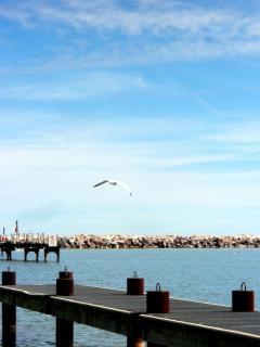 litoral Milwaukee, pássaro