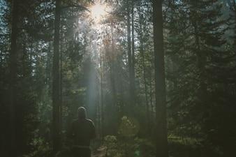 Solitária walker na floresta