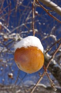 maçã congelada