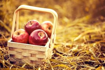 Maçãs vermelhas saborosas frescas na cesta de madeira no fundo vermelho do outono