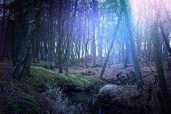 Mágica floresta escura e misteriosa.