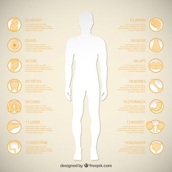 Silhueta do homem e ícones de órgãos humanos