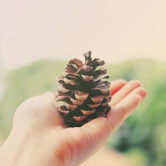 Mão segurando cone de pinho com efeito de filtro retro