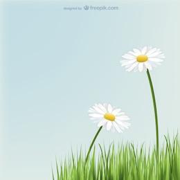 Margaridas flores com grama