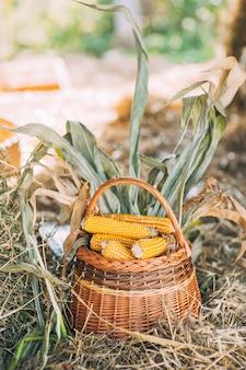 Milho na cob em uma cesta