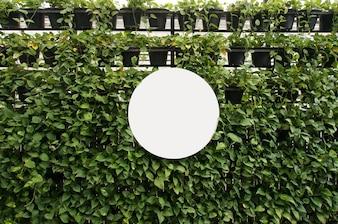 Mock up Blank white of signboard no espaço de parede de plantas para texto. montagem de exibição de produtos