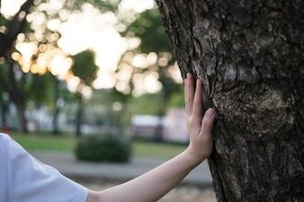 Mulher, mão, toque, árvore