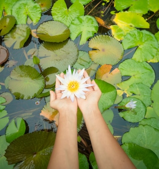 Mulher segurando flor de lótus - waterlily