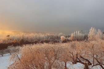 Natureza congelado