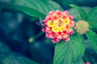 Néctar flora parque verde macro