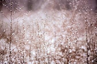 Nevando no campo