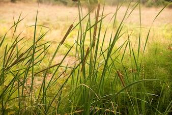 Novo orvalho da manhã na grama da primavera, fundo natural - closeup