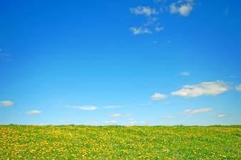 O campo com flores amarelas e céu azul