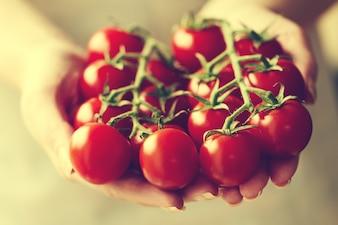 O cozinheiro segura tomates de cereja frescos. Fechar-se. Conceito de culinária ou comida saudável. Toning.